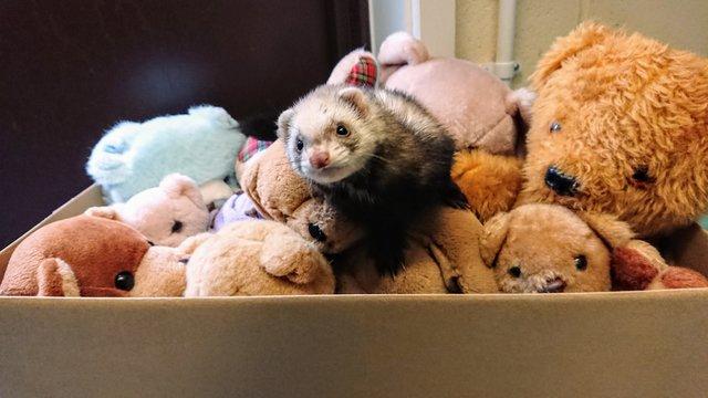 Женщина выносила из гаража коробку со старыми игрушками… И одна из них вдруг зашевелилась!