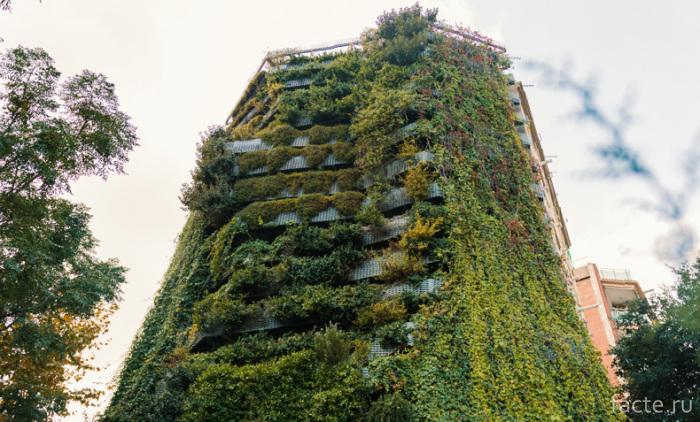 Вьющиеся-растения-на-фасаде