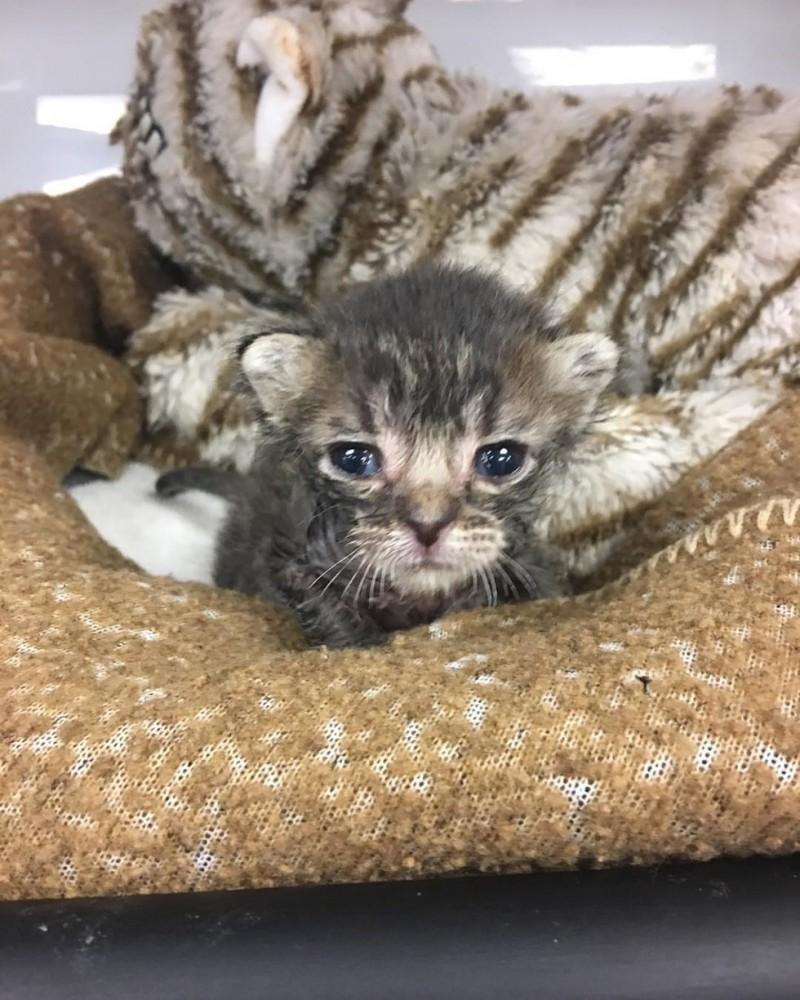 У брошенного на жаре раненного котенка не было шансов выжить, если бы не добрые люди