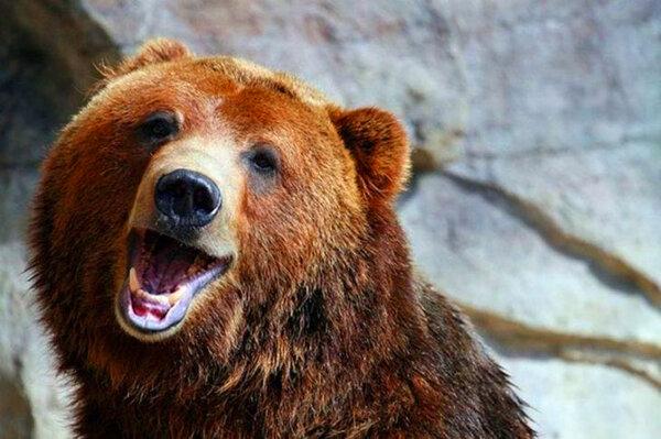 Как медведь, спасенный лесником,