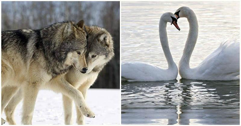 Вместе навсегда: 8 животных …