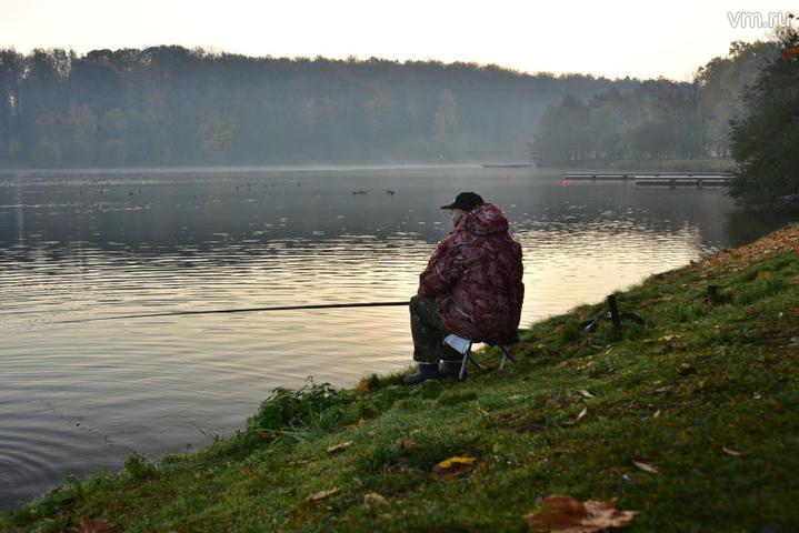 Рекордного стокилограммового сома выловили в Польше