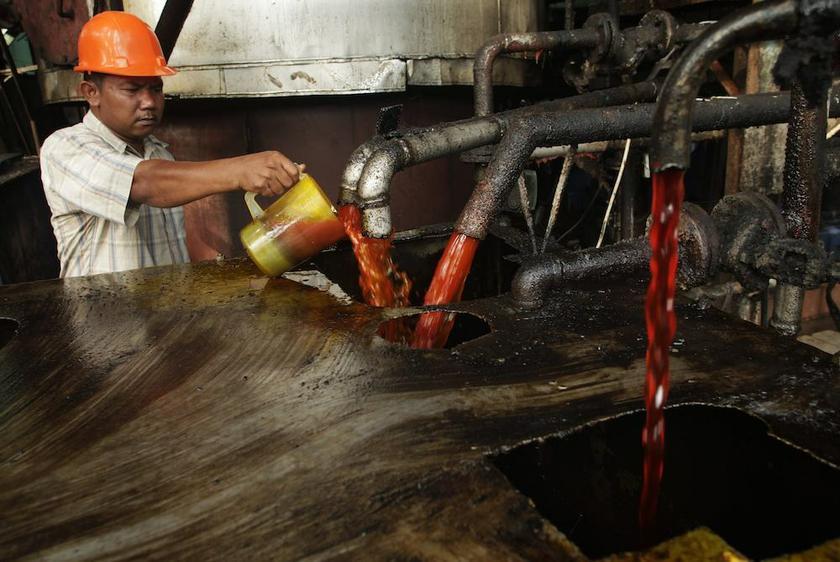 Миллион тонн пальмового масла для России. Безумие или вредительство?