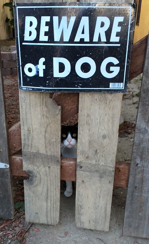 Осторожно, злая собака!))