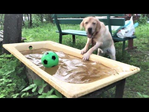 Смешные собаки 2018 Приколы с Собаками ТОПовая подборка Funny Dogs Compilation 2018 #1