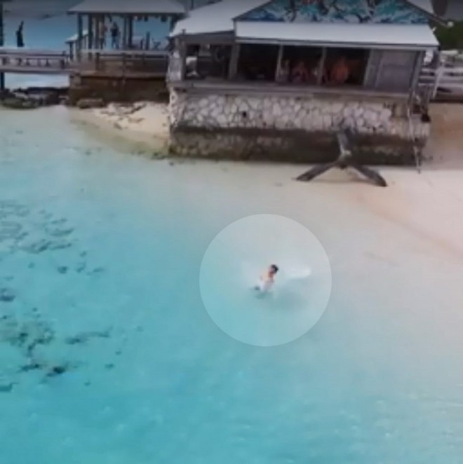 Акулы начали приближаться к ребенку, но их вовремя заметил мужчина игравший с дроном акулы,Багамские острова,беспилотник,дрон,нападение акул,Пространство
