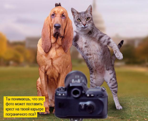 Пушистая чума XXI века. Как коты захватили мир и Интернет быт,домашние животные,животные,коты,собаки,советы