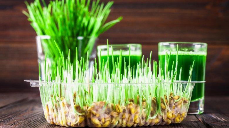 Съедобная грязь, заливные салаты и другие самые странные пищевые тренды в мире