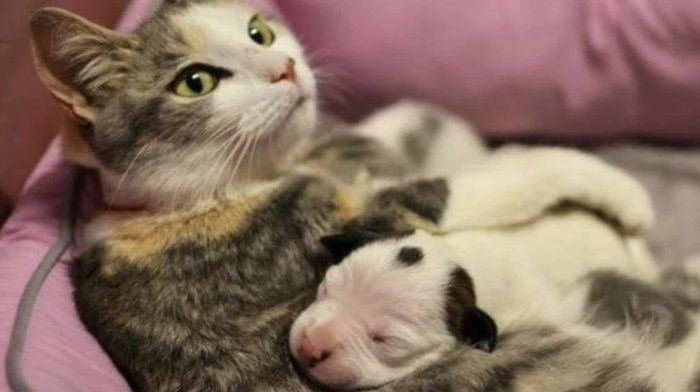 Брошенный новорожденный щенок голодал до тех пор, пока о нем не начал заботиться кто-то неожиданный