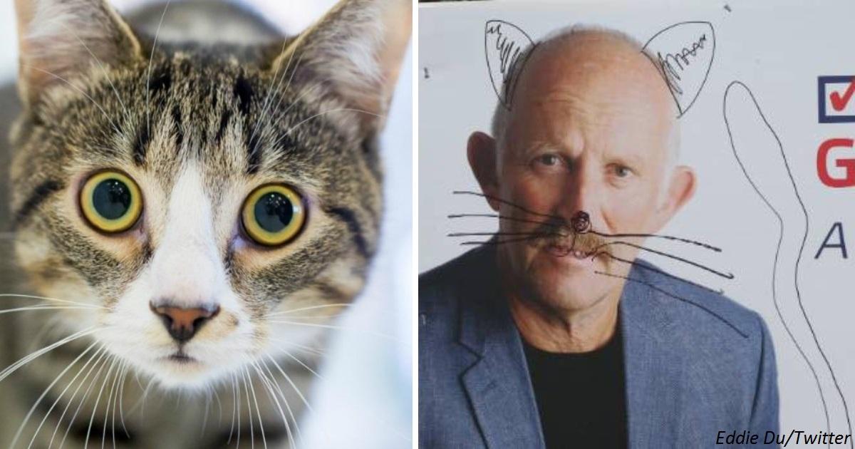 В Новой Зеландии запретят кошек, как вредителей. Люди считают вредителями чиновников
