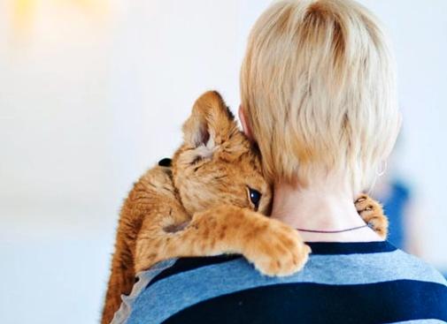 Симбе повезло — неравнодушные люди спасли от гибели африканского львёнка