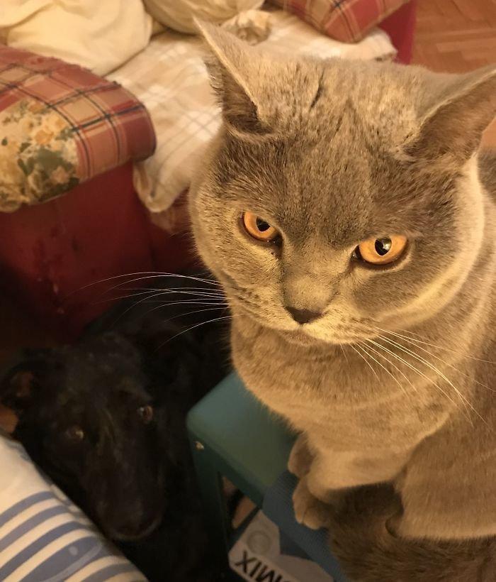 """""""Что это ты ешь?"""" Попрошайки, которым невозможно отказать животные, кот, коты, кошки, приколы с животными, смешно, фото, юмор"""