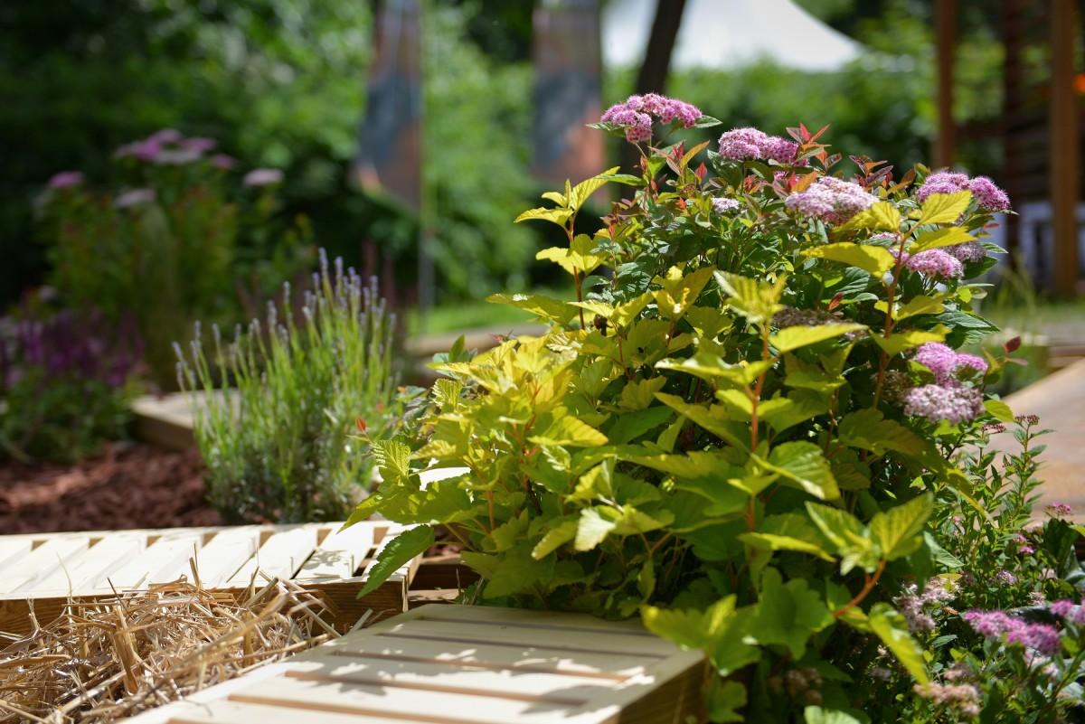 Ландшафт в цветах: серый, темно-зеленый, бежевый. Ландшафт в стиле экологический стиль.
