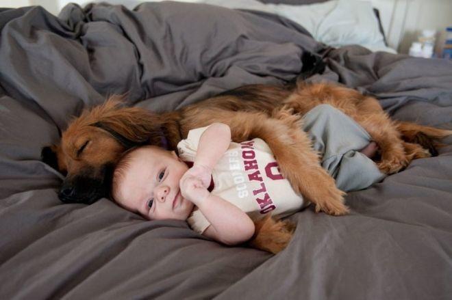 20 умилительных фото собак, которые безгранично любят своих хозяев