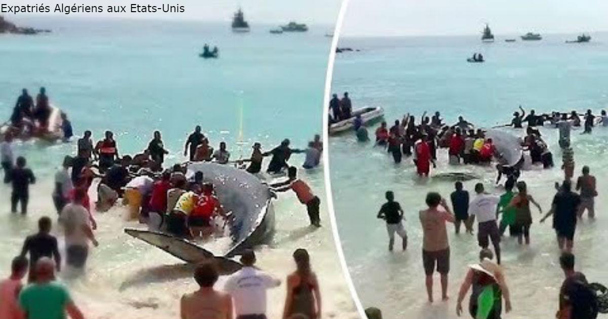 Отдыхающие бросились на помощь выброшенному на берег киту - и вот как он их «отблагодарил»!