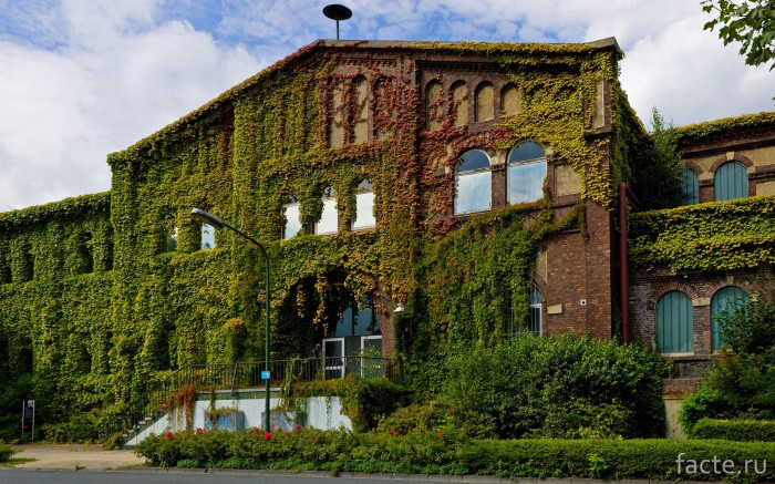 Озеленение-старого-здания