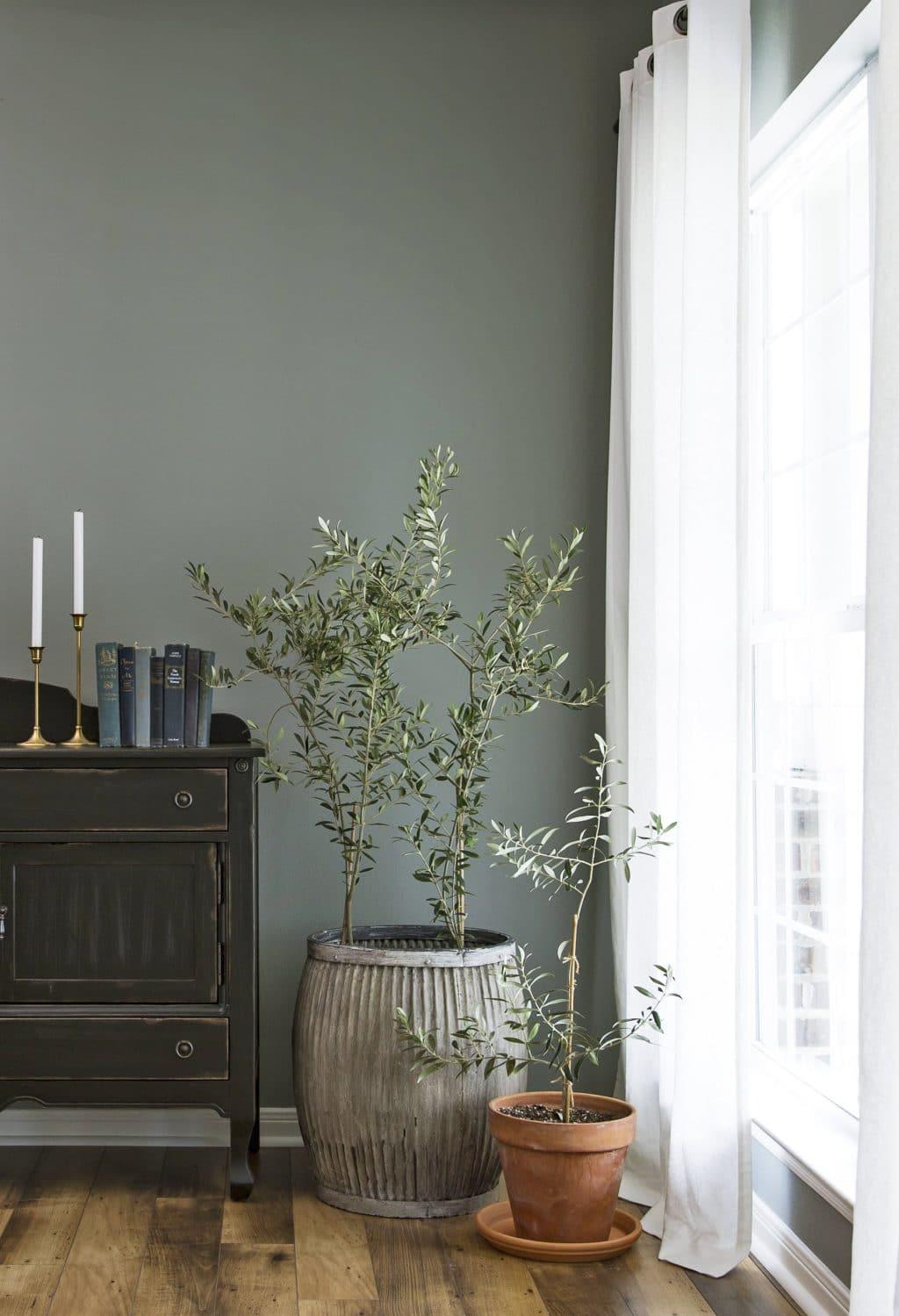 7 беспроблемных деревьев, которые можно выращивать дома комнатные растения