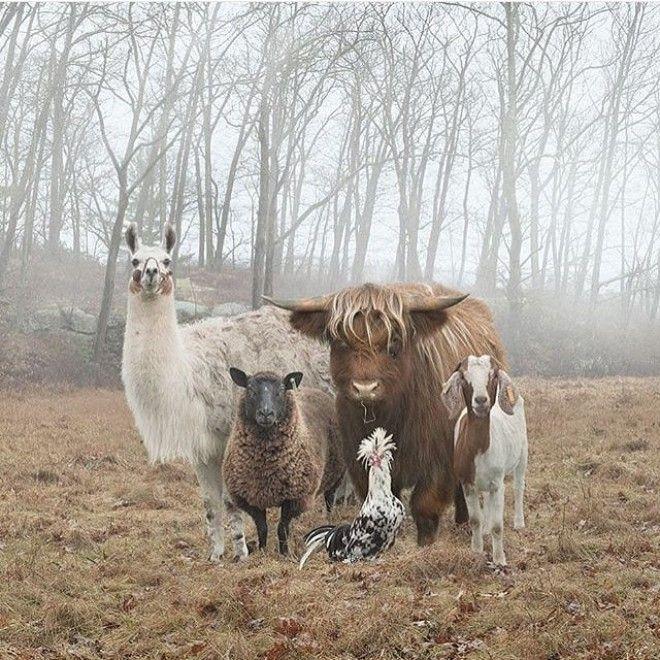 S16 животных которые будто сами попросили чтобы их сфоткали