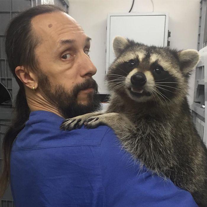 Енот Яша работает в ветеринарной клинике России. Его задача - успокаивать больных собак