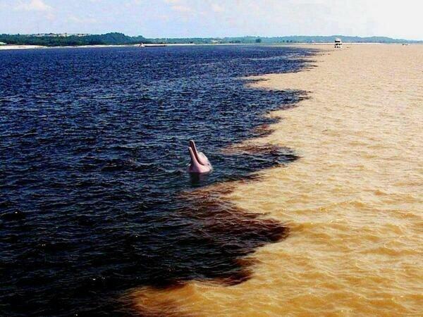10. «Так выглядит место слияния Амазонки и Риу-Негру в Бразилии. Разный цвет воды обусловлен разными почвами» в мире, вещи, кадр, красота, подборка, удивительно, фото