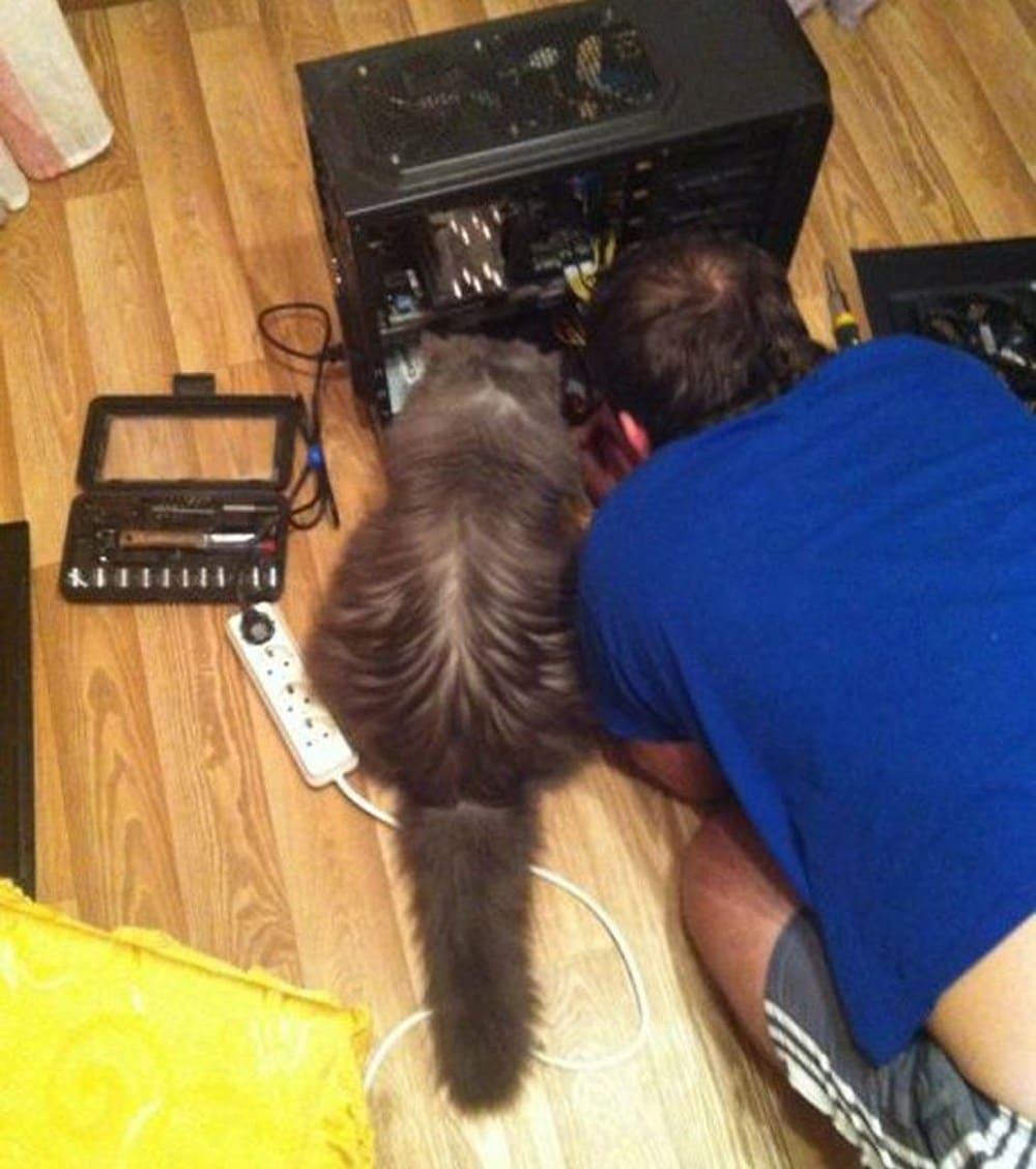 13 смешных котов, которые ведут себя как люди
