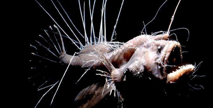 Как женится морской черт