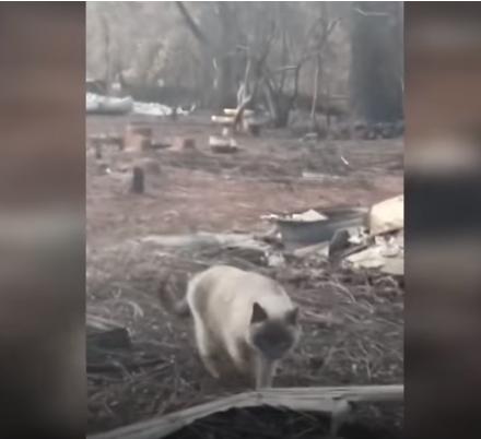 «Такая счастливая и голодная». Семья вернулась в сгоревший Парадайс и нашла там свою кошку
