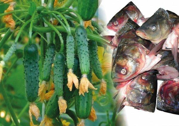 Рыбная уха - самое лучшее уд…