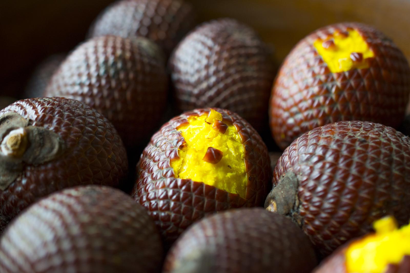 фрукты мира фото вид земноводных ящериц