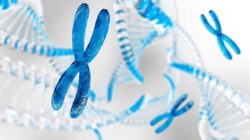 Израильские ученые повернули вспять процесс клеточного старения