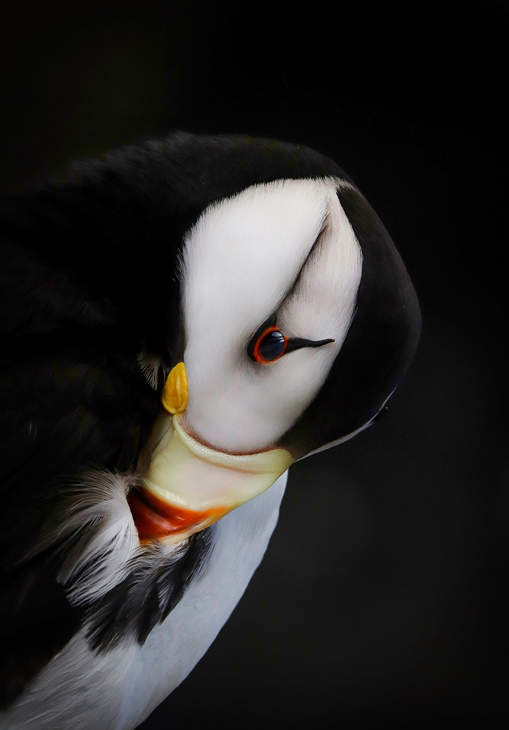 Птичий конкурс Audubon Photography Awards 2019