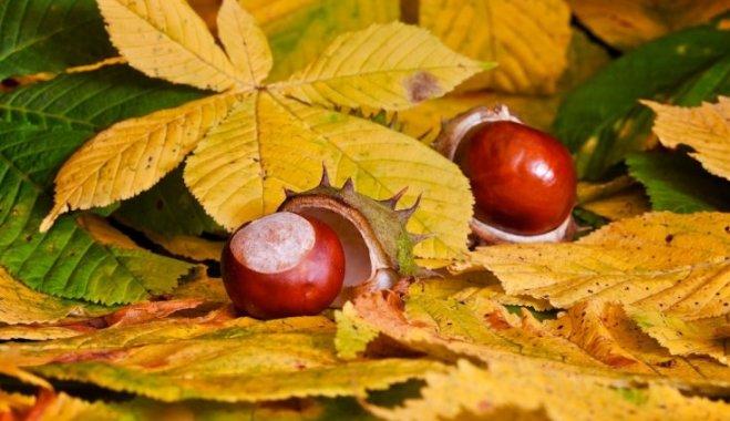 Осенний талисман. То, чего вы не знаете о каштане
