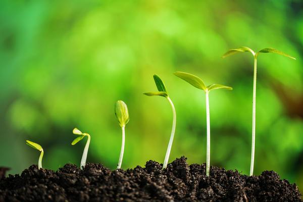 Полные всходы - это сеянцы с раскрывшимися семядолями