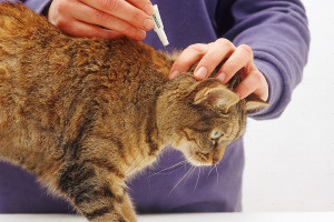 Используйте антиблошинные капли для животных.