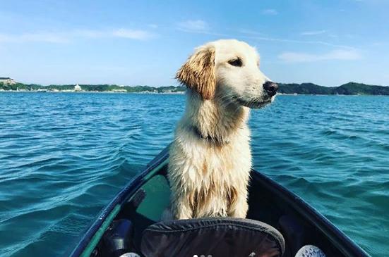 Собака из Японии, любящая подводное плавание, покорила интернет