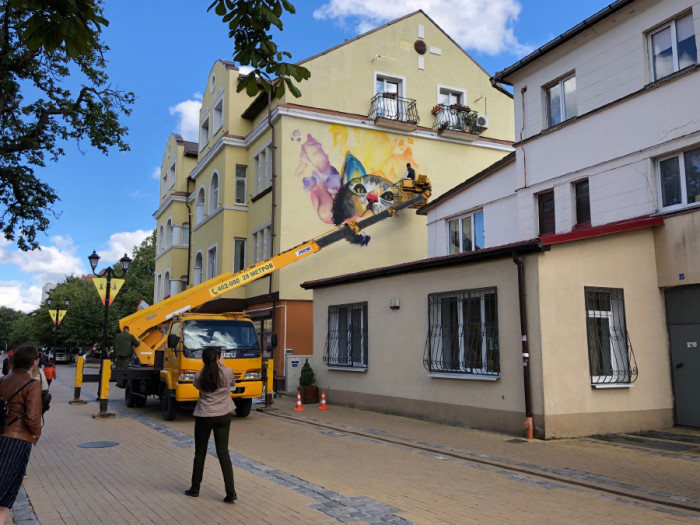 Изображений кошек становится всё больше и больше. /Фото:nz39.ru, пользователь natalya5419