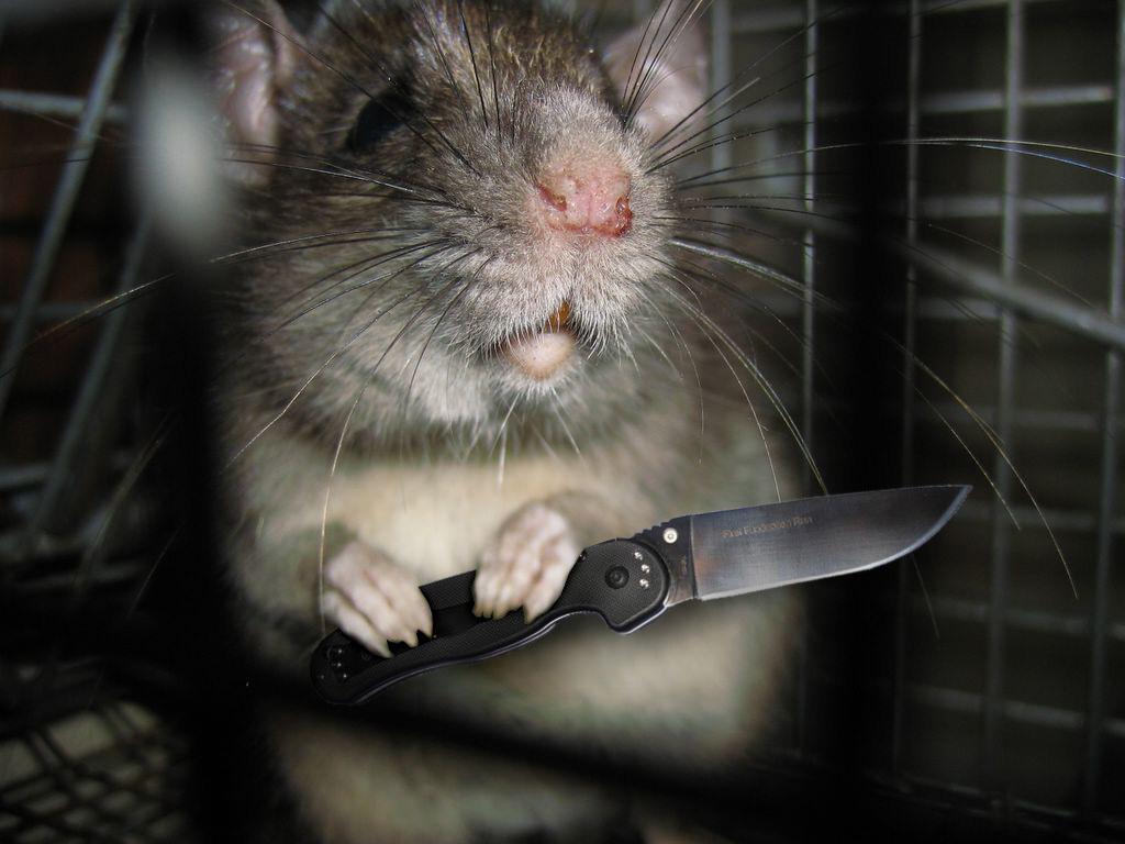 возведен индивидуальному злая мышка картинка этот