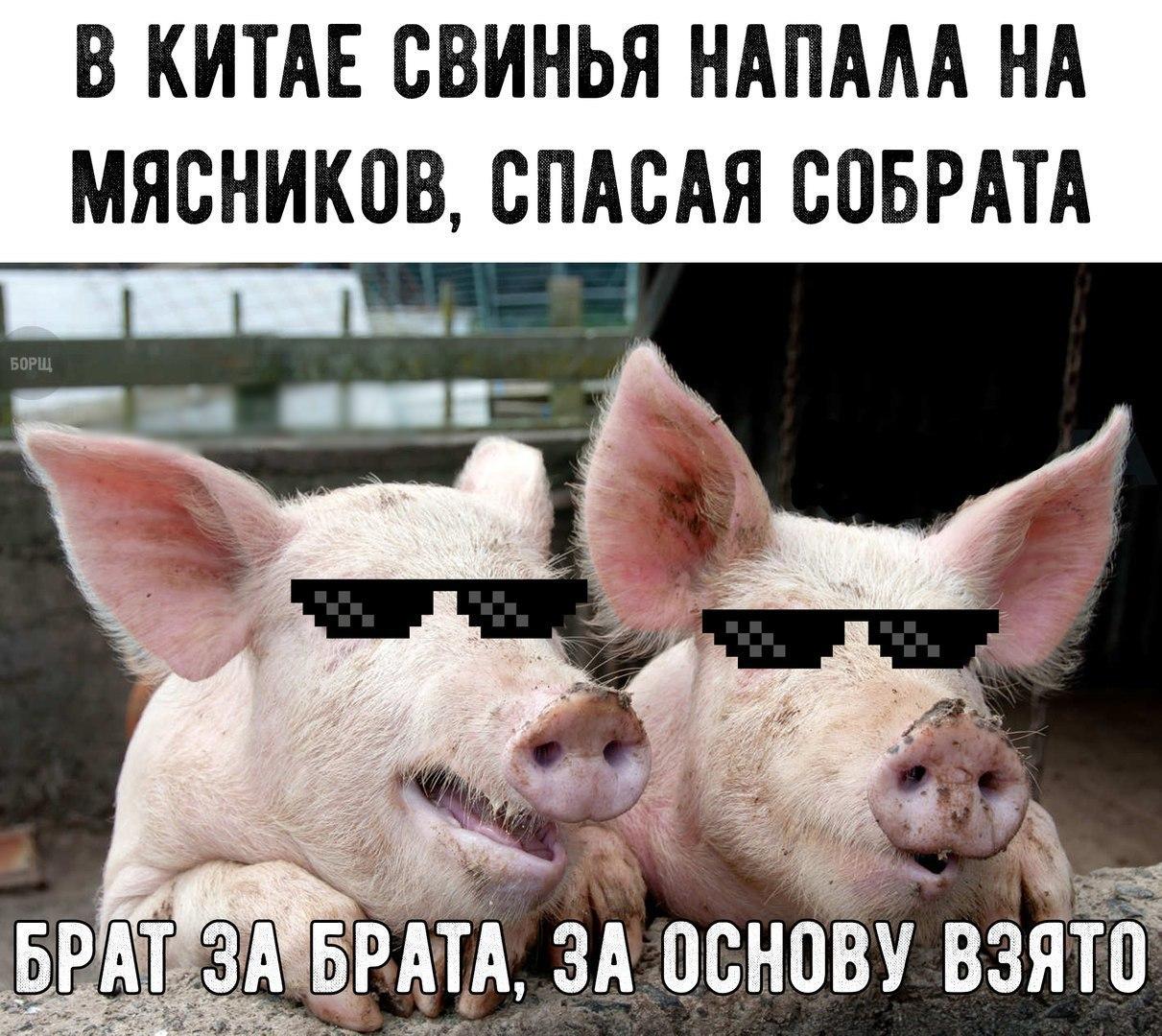Свинья смешные картинки с надписями