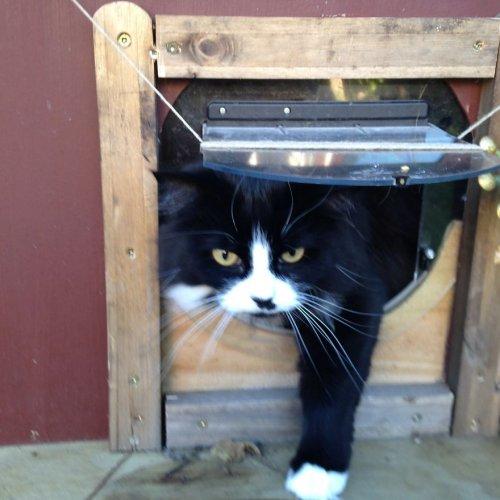 Владелица кошки построила дл…