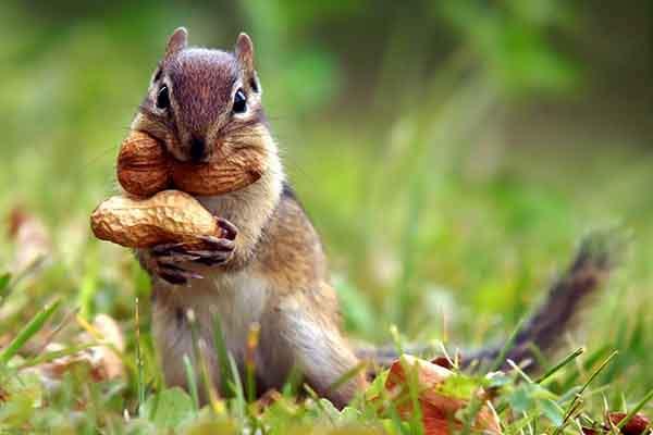 Самые умные животные нашей планеты