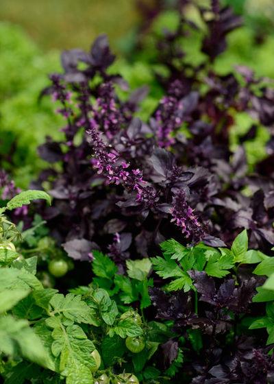 'Сад-огород