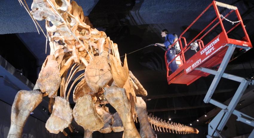 В КНР найдены важнейшие останки динозавров
