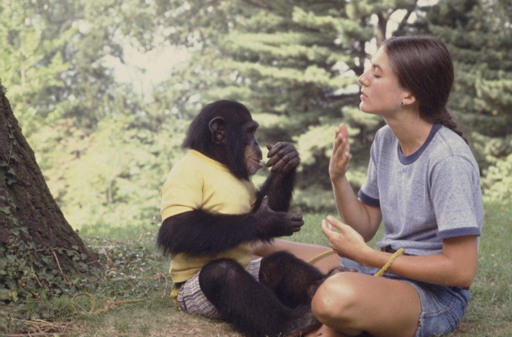 Разум у животных 12