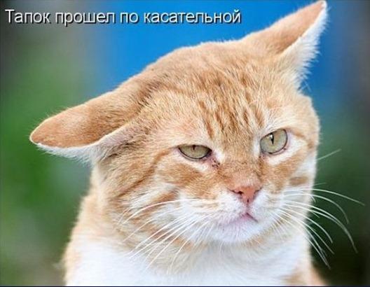 Кошачья жизнь - она такая разная