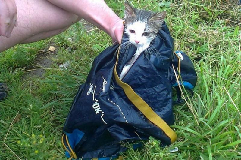 Спасение котёнка с необитаемого острова