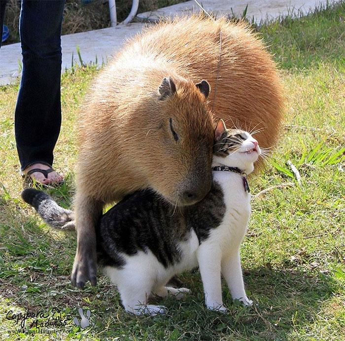 18 малоизвестных и милых фактов о животных, которые заставят полюбить их ещё больше животные, которые, животных, которых, способны, когда, символом, попугая, время, могут, являются, часто, поэтому, свиней, африканских, несколько, коров, очень, других, различать