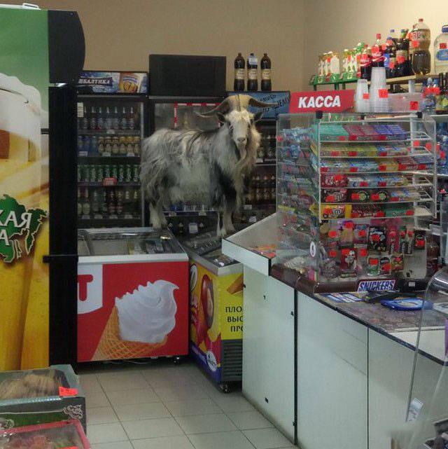 2. Зашел за молочком в магазин, а что? россия, смешно, фото, юмор