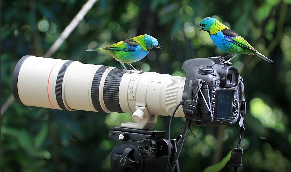 Крохалев фотографирование мысленных образов статья простой рецепт