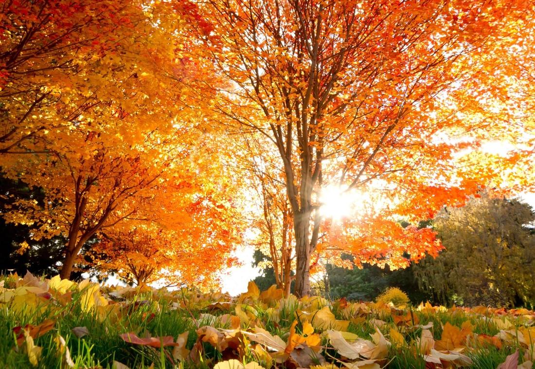 Осень картинки крупные