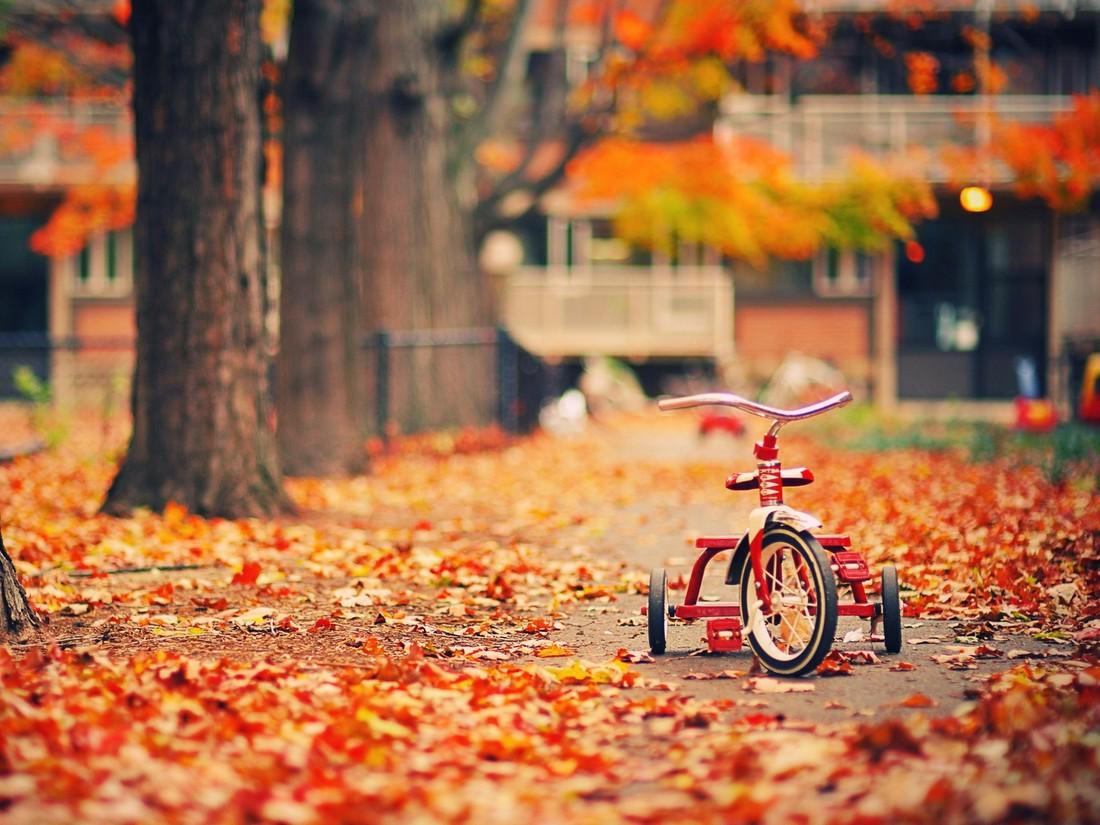 Золотая осень в фотографиях